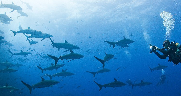 Scuba-Diving-Vacations-Galapagos-liveaboards-holidays