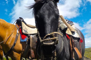 HORSE-RIDING-IN-ECUADOR