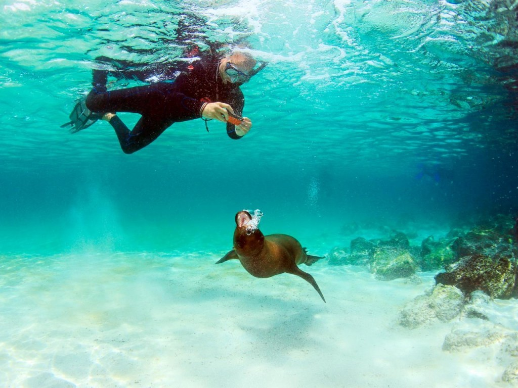 10 Reasons For A Cruise To The Galapagos Islands