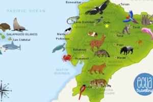 Animals of Ecuador map