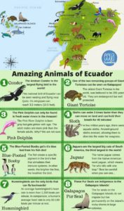 Infogram Animals Ecuador