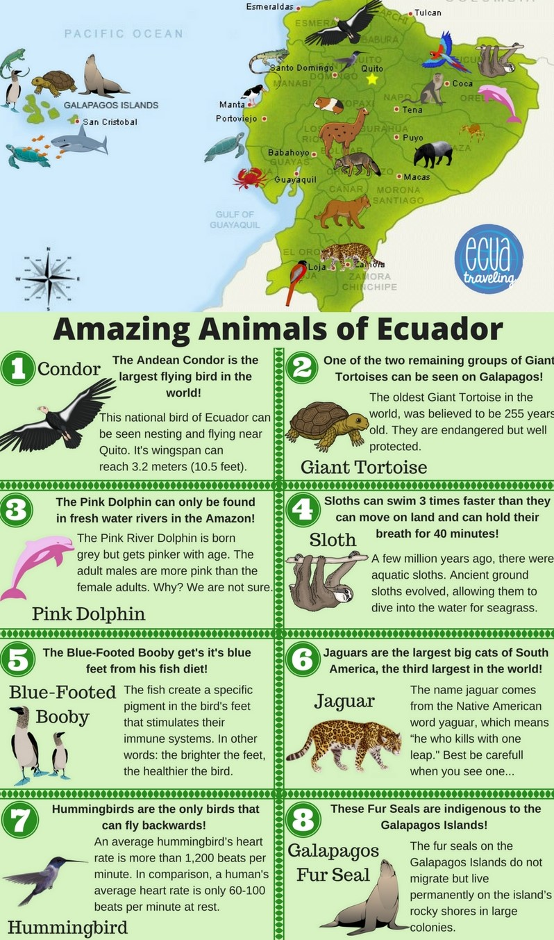 Map-Animals-Ecuador Galapagos Islands Map Google on maldives islands google map, netherlands google map, fiji islands google map, bahrain google map, easter island google map, ethiopia google map, alaska google map, barbados google map, iceland google map, seychelles islands google map, guam google map, baltic sea google map, new zealand google map, grenada google map, cuba google map, lebanon google map, qatar google map, hawaii google map, caribbean islands google map, aruba google map,